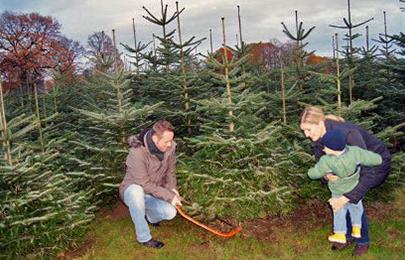 Weihnachtsbaum selber schlagen krefeld